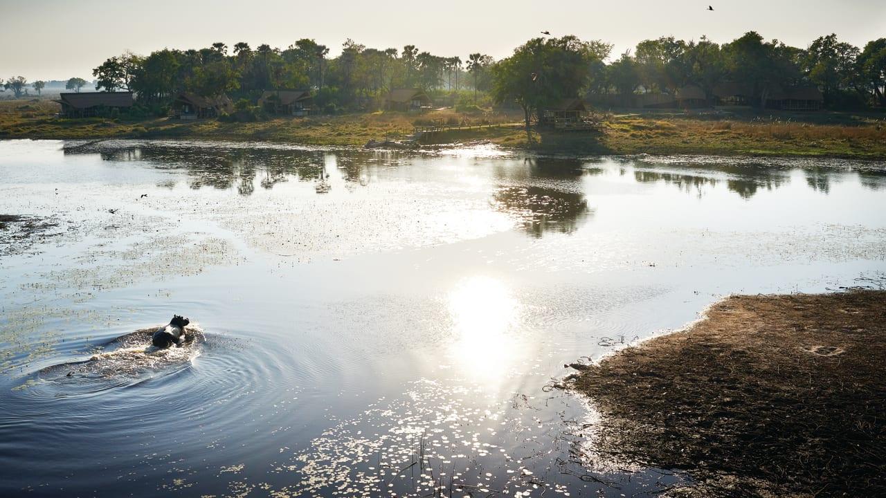 Mokoro canoe trip, Okavango Delta