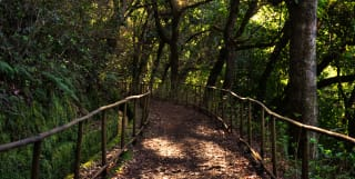Wander Through Madeira's Wonders