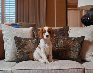 a dog sat on a sofa