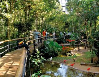 Bird Park, Iguassu Falls