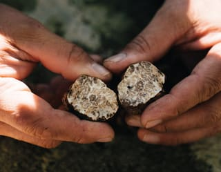 cross section of a black truffle held in a pair of hands
