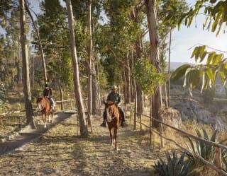 Cabalgata en un caballo peruano de paso, cañón del Colca