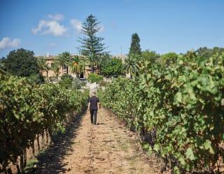 Winery Tour Mallorca