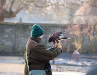 Oxford Experiences birds of prey