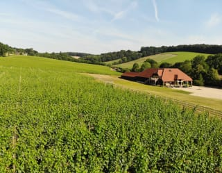 View of Vineyard at Hundred Hills