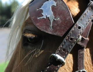 Horseback Riding in San Miguel de Alende