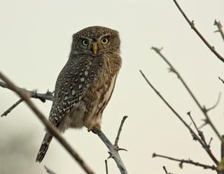 Bird Watching on Safari