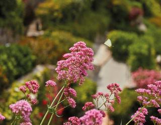 Belmond Villa San Michele giardino