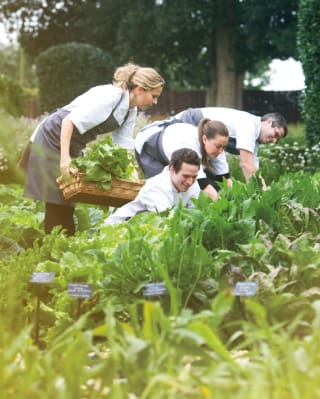 A group of chefs picking herbs in a garden