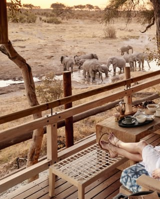 Lady reclining in a deck chair overlooking Elephants at a watering hole