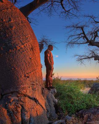 Passeio pelas pinturas rupestres de Bushmen e pelas árvores de baobá